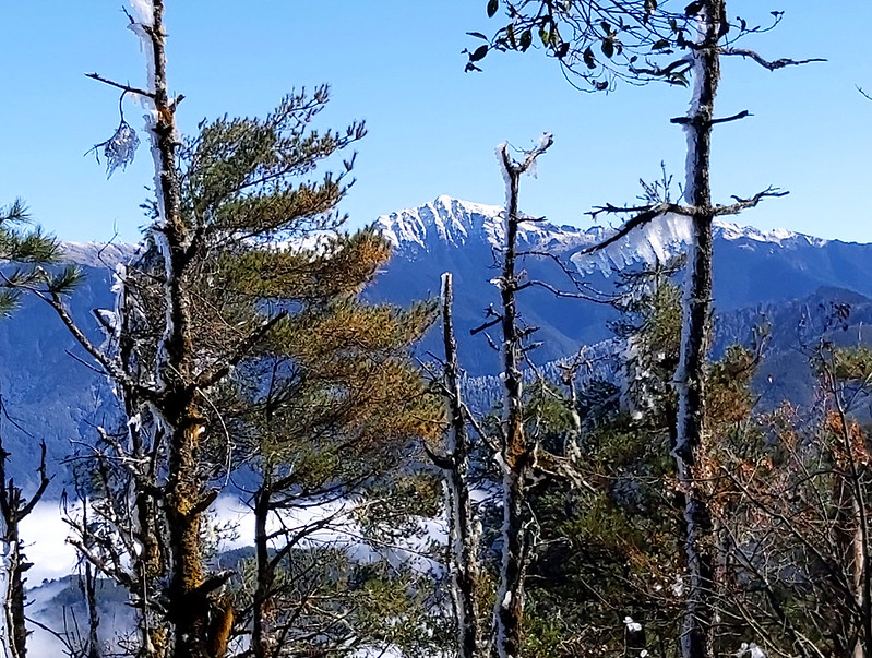 ROMA: snow capped Mt. Nanhu, 3,742 m/12,277 ft through the icy trees