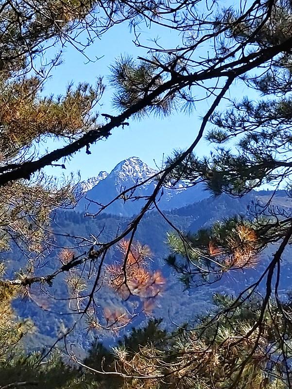 ROMA: Mt. Zhongyanjian, 3,705 m /12,155 ft, through the trees