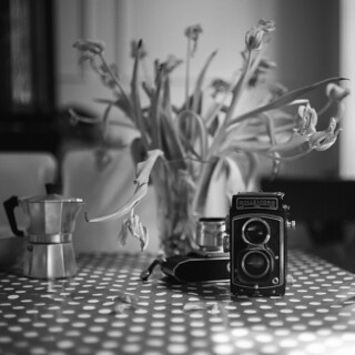 Still life with tulips and cameras | by Kamerakata