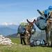 Nos deux ânes au col de Creuson