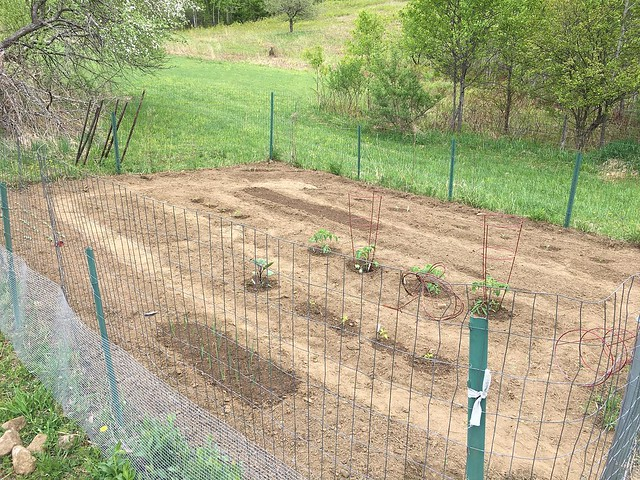 """Added leeks, tomatoes, peppers, eggplant, watermelon, cucumbers, yellow squash, carrot (seeds).      I can't find any more 1/2"""" 3 foot fencing and I'm worried about woodchucks sneaking in."""