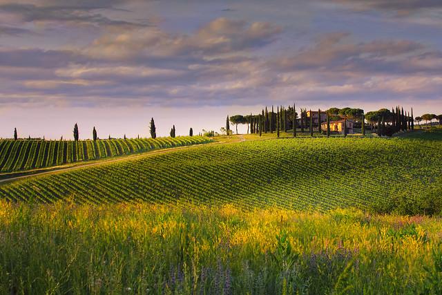 Colline Fiorentine Badia a Passignano sunset