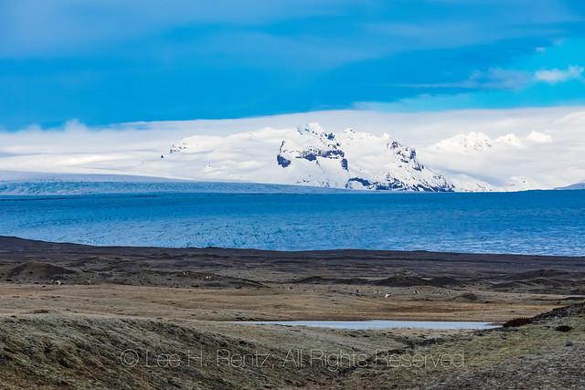 Reindeer and Öræfajökull Volcano in Iceland