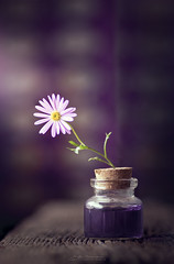 """Flowers essence""  (由  mariajoseuriospastor"