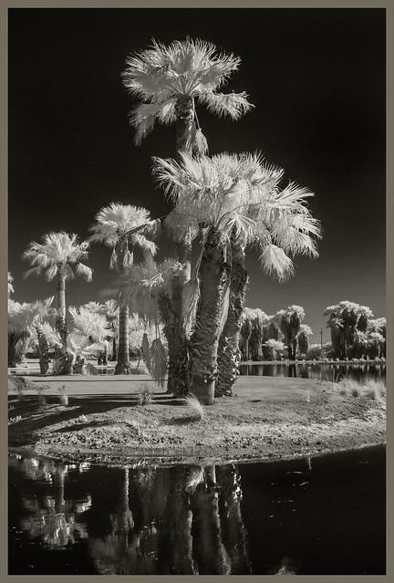 Agua Caliente IR #3 2020; Island Palms
