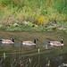 Pleasanton Canal-1050318.jpg