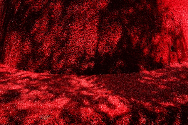 the shadow of a tree and red
