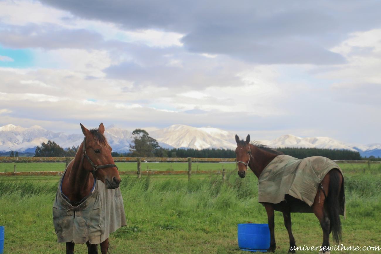 New Zealand Trip_195