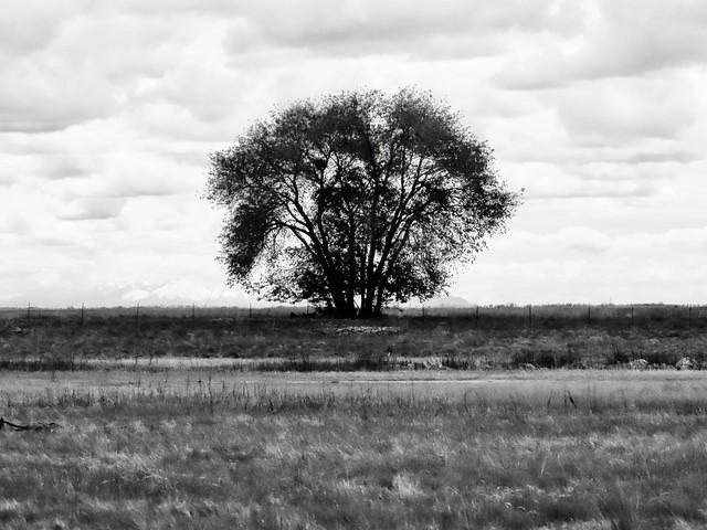 Tree Darkly