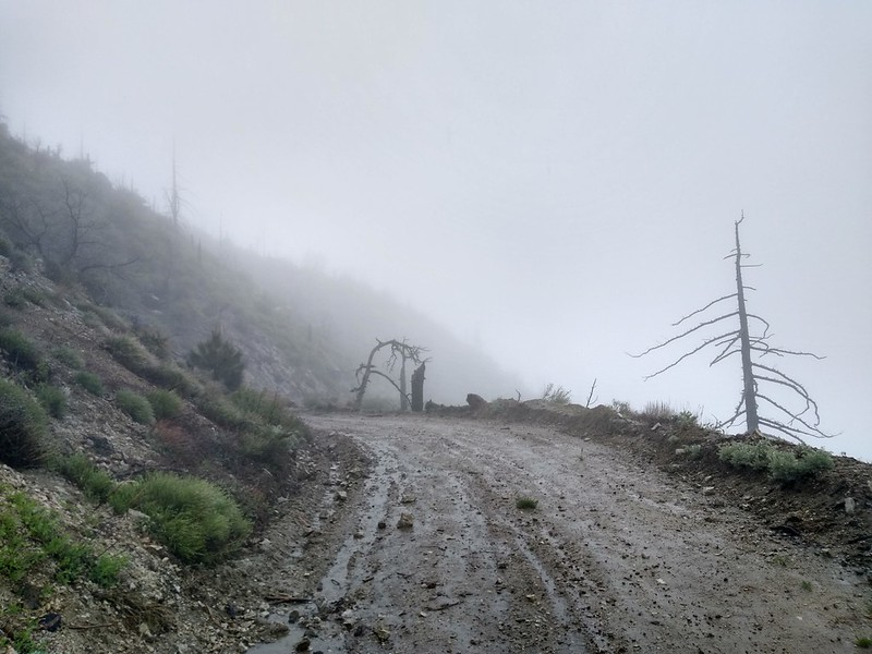 It was raining and blowing hard on Pacifico Mountain Road as we hiked down to Mill Creek