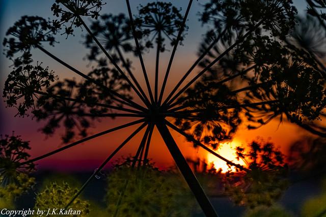 Sunrise, Macros and backlight ..., Amanecer, Macros y contraluz...