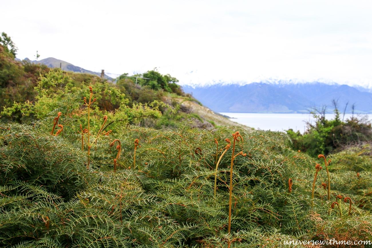 New Zealand Trip_165