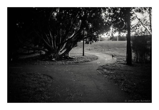 going home, Sydney, 2015  #330