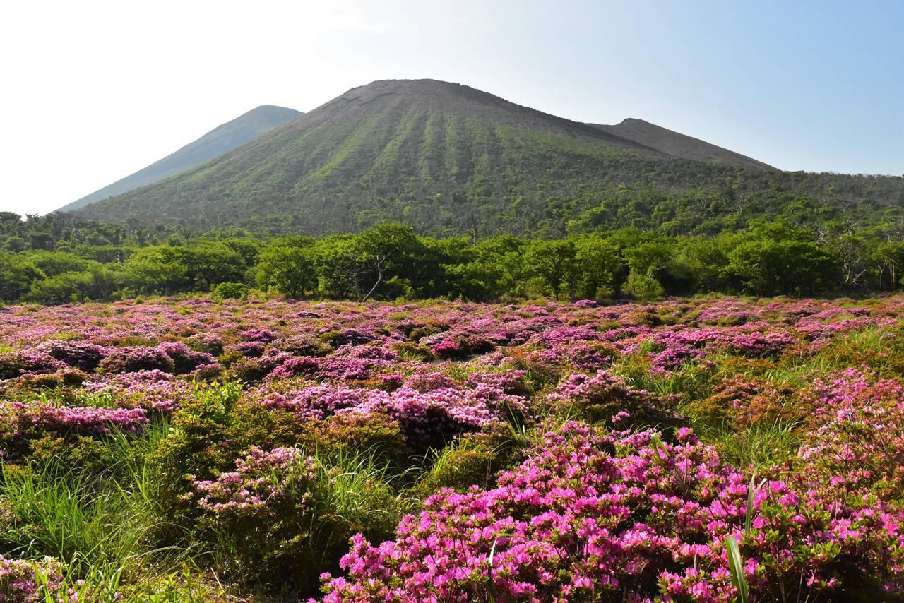 高千穂峰のミヤマキリシマ