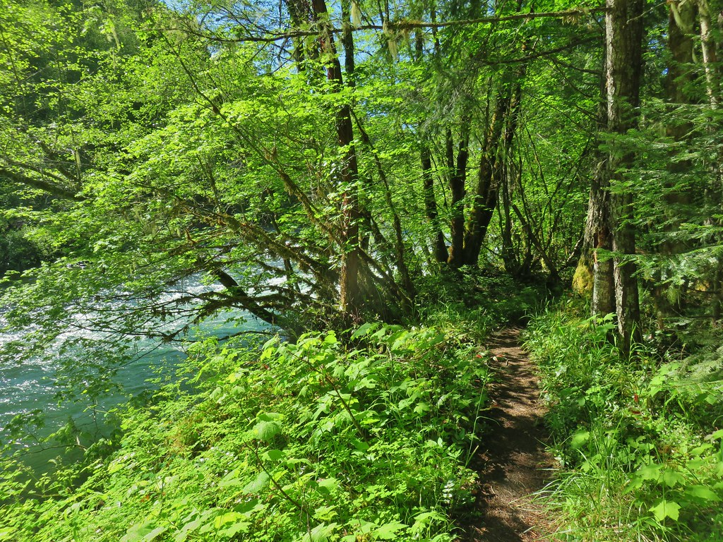 Middle Fork Trail