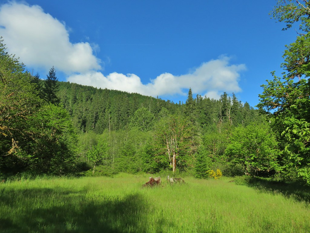 View from the Middle Fork Trail