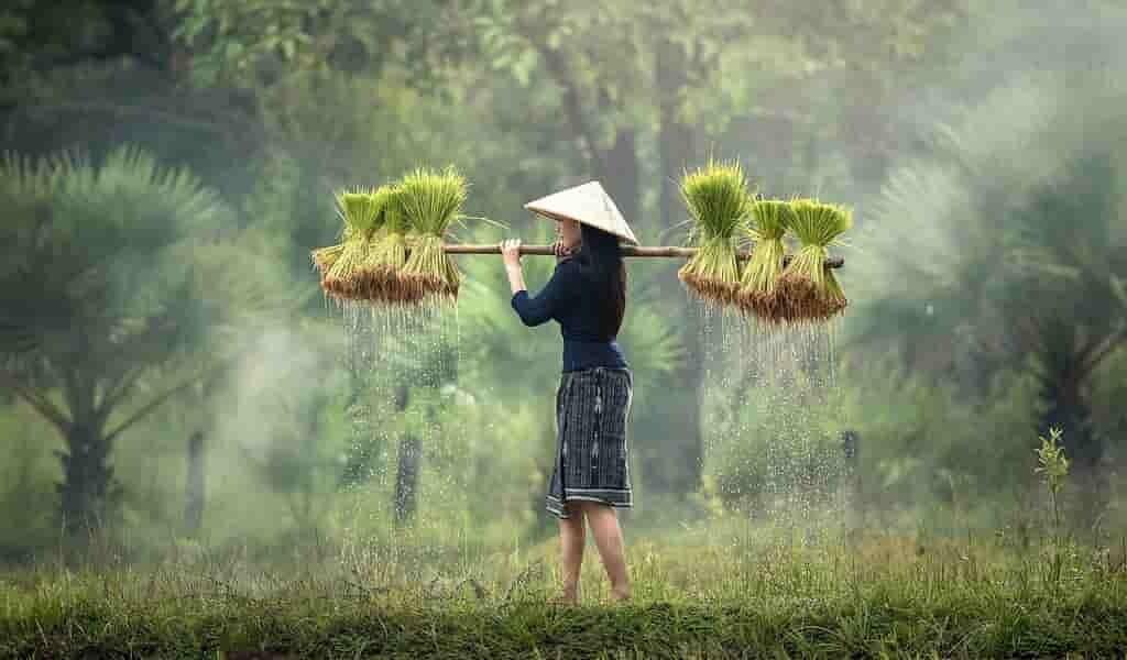 Un probiotique végétal pour réduire l'utilisation des pesticides