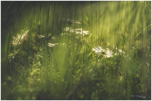 Die Wiese / The Meadow