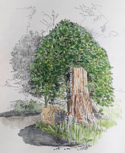 Holly bush and tree stump