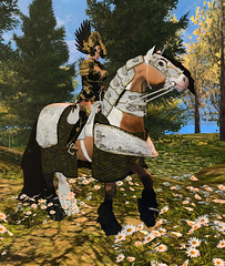 Gypsy Vanner and Knight