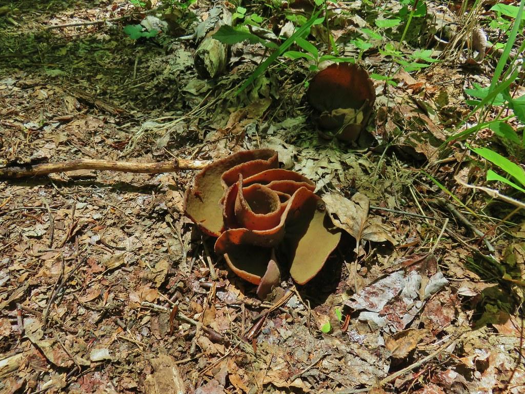 Folded fungus