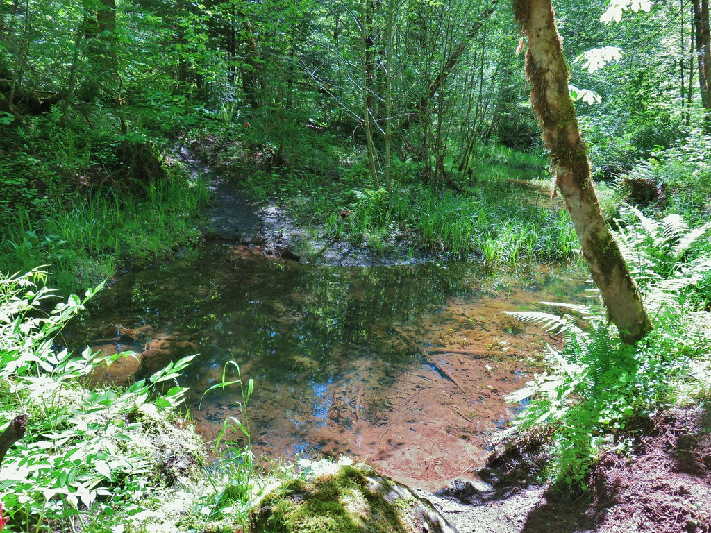Water covering the Middle Fork Trail
