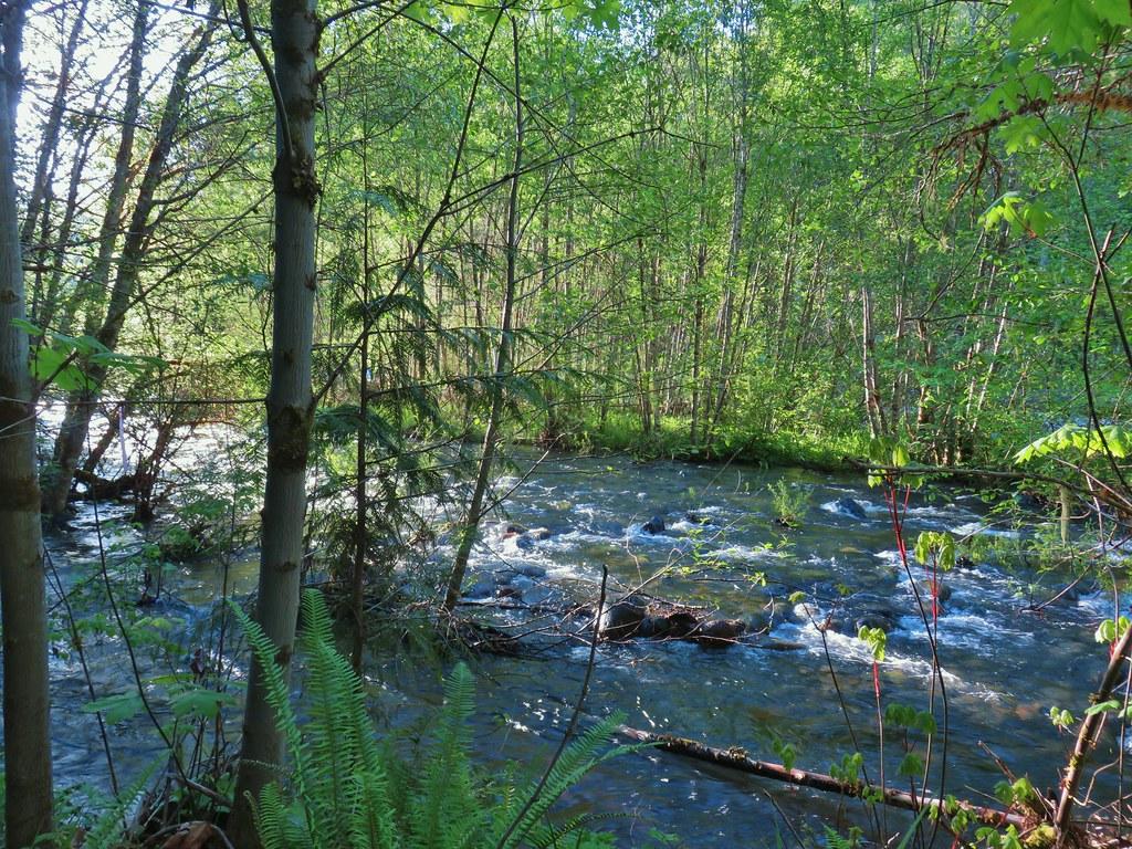 Middle Fork Willamette River from our dinner/breakfast spot