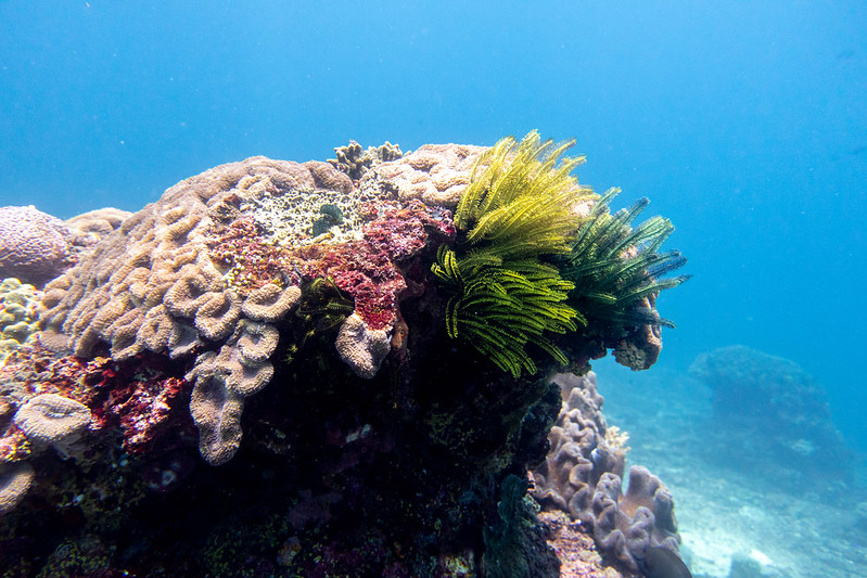 Photo of coral in Indonesia against the bright blue background of the sea.