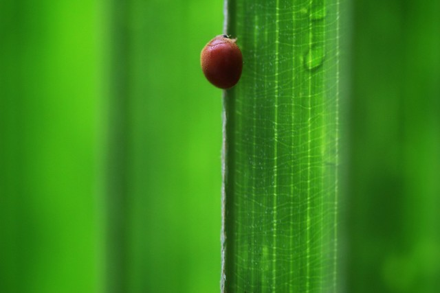 Red on green