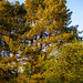 Our Garden-38.jpg