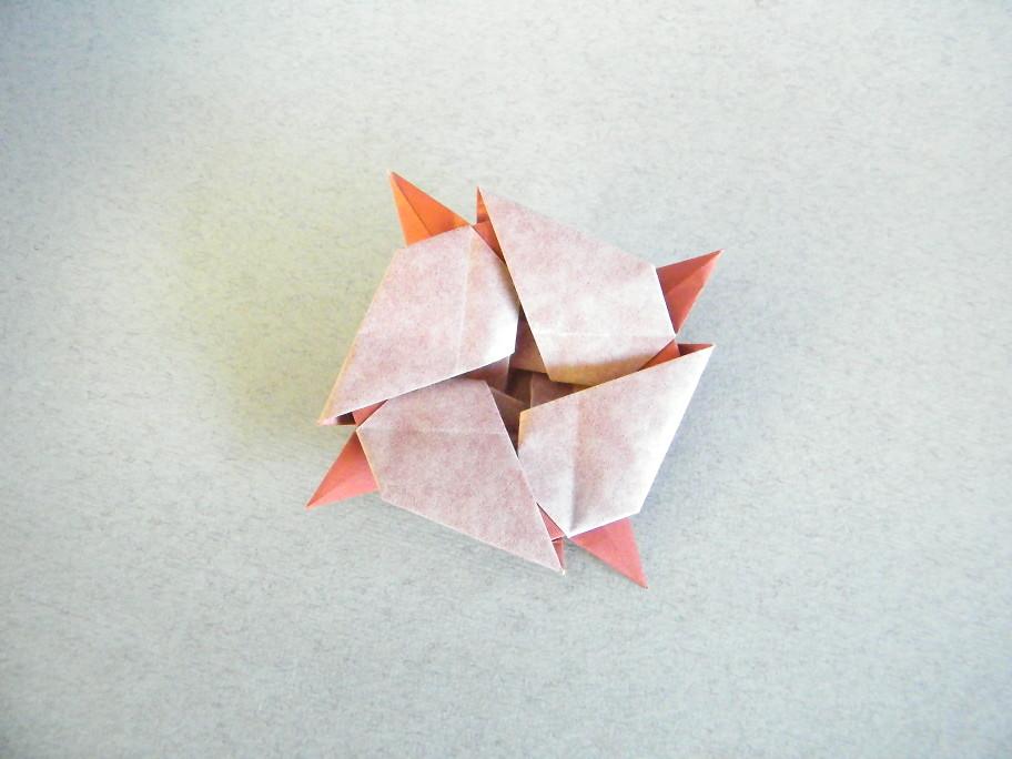 Cotton Flower - Andrew Hudson