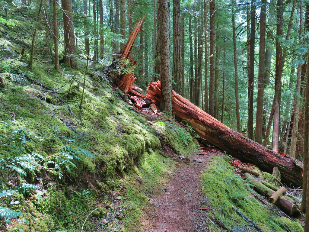 Blowdown over the Middle Fork Trail