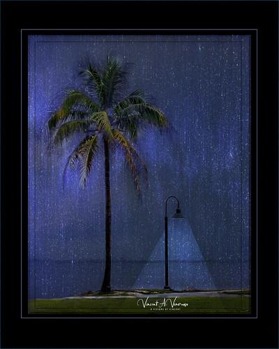 topaz topic sarasota palm tree texture creative whimsy rain art adifferentpointofview blue