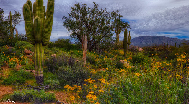 Bartlett Lake, Arizona
