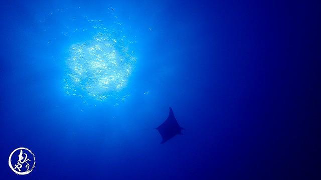 気持ちよさそうに泳いでました(*˘︶˘*)