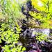 De l eau des arbres - Malmaison mai 2020