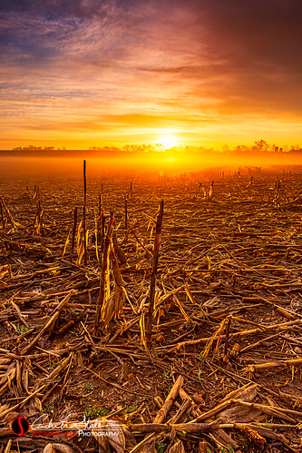 andrewslaterphotography clouds corn country crop farm field fog landscape sunrise sussex waukesha wisconsin unitedstatesofamerica rural travel discoverwisconsin travelwisconsin soil growth agriculture wi visitwisconsin nature outdoors
