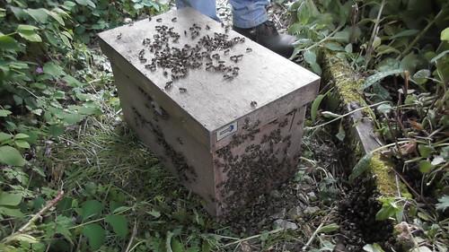 swarm box May 20