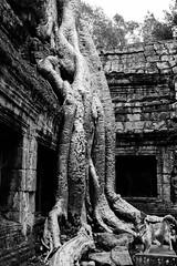 Photoshop: Laika in Cambodia