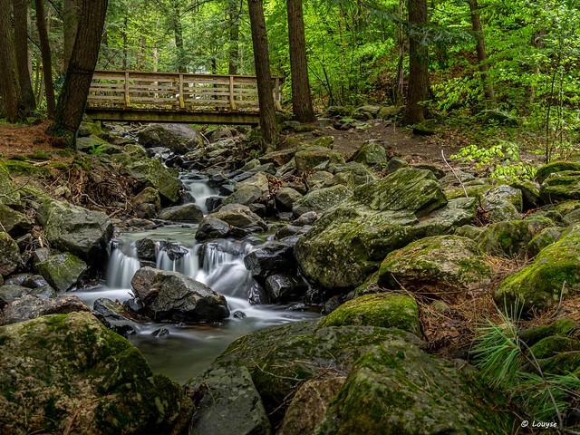 Ruisseau  Dunlop