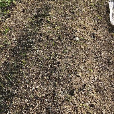大豆、芽が出ないなー。今週末まで待って発芽しなかったらやりなおそ。ついでに土ふるいしよ(とりあえず荒野をどうにかするの先決でまだしてない)