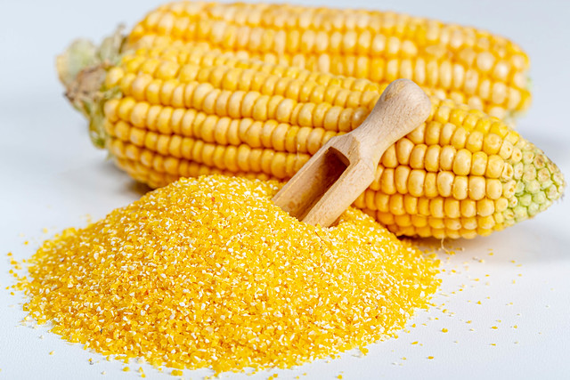 A pile of yellow corn grits with corn cobs and a wooden scoop on a white background