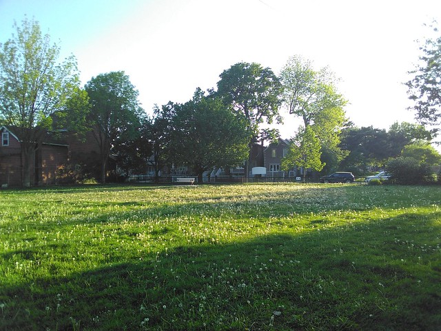 Evening among dandelions #toronto #davenport #gearyave #bristolavenueparkette #dandelion #parks #evening #socialdistancing