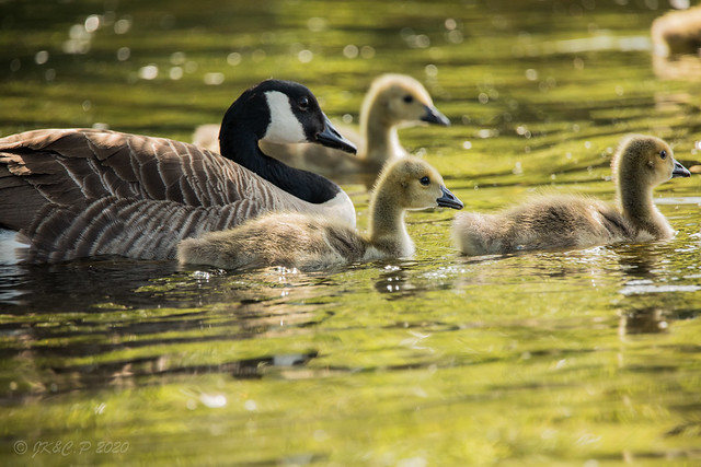 A Swim with Mum