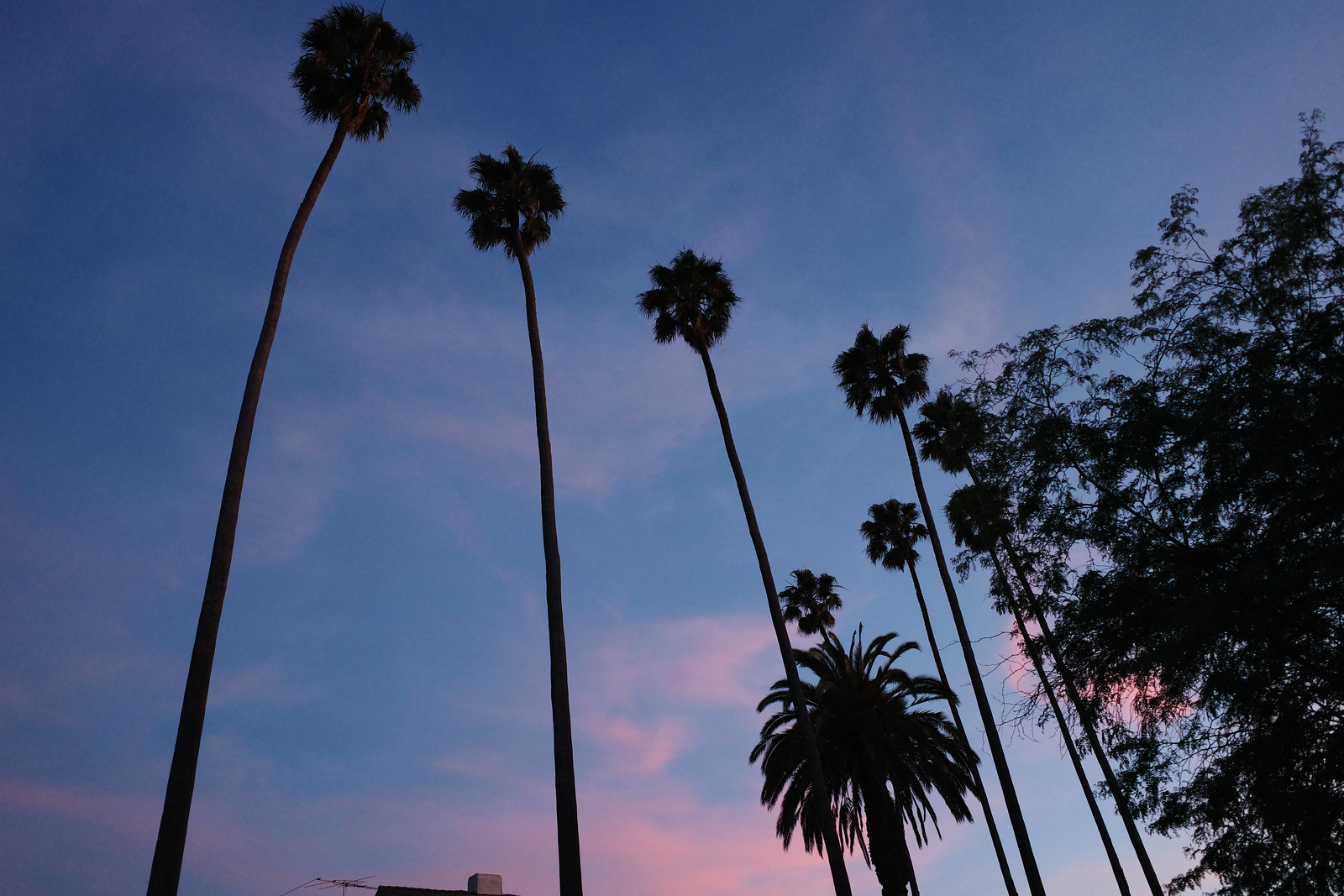 palm trees against late sunset