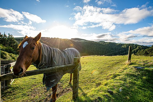 moonshine hilltop horse friendly autumn sunrise grass eating contented happy