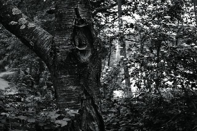 tree trunk@walking path 6