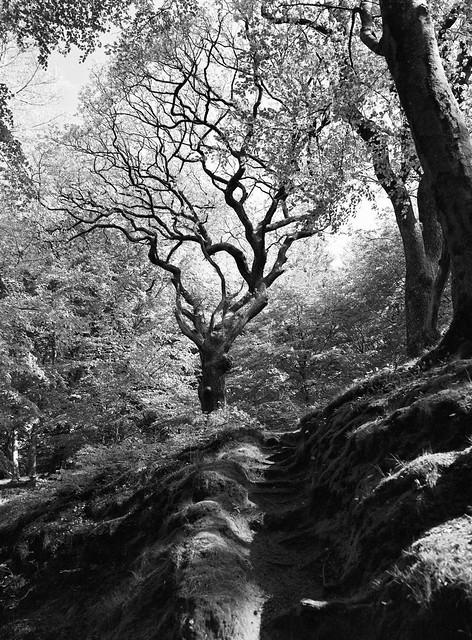 Trappetrin i skoven bagved Niels Bugges Kro