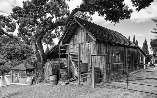 A shed, wine barrels, and an oak tree