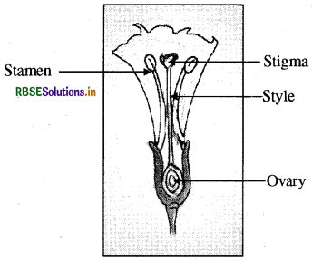 RBSE Solutions for Class 8 Science Chapter 6 Reproduction ...